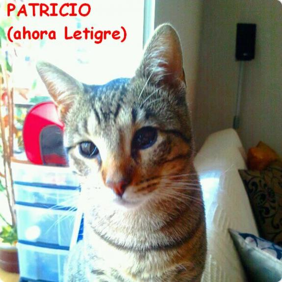 Patricio (ahora Letigre)