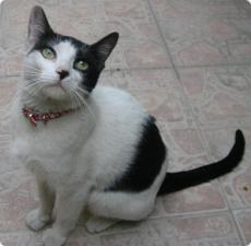 Gato de San Vicente