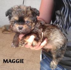 Maggie4