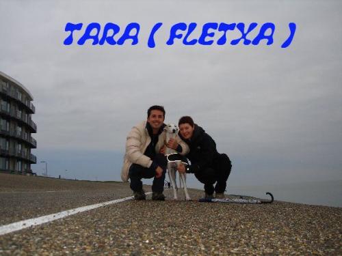 TARA ( FLECHA )