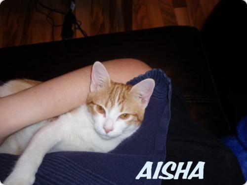 AISHA ( MOJITA )
