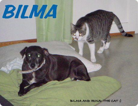 BILMA