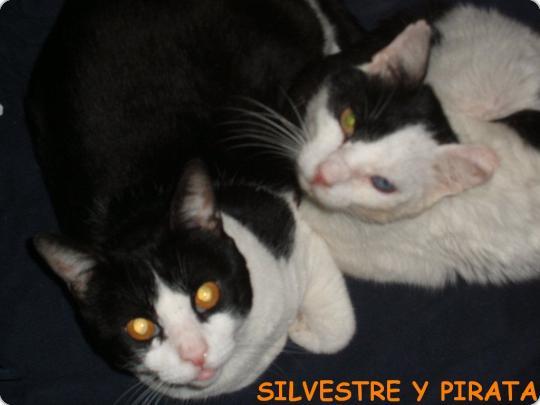 Silvestre y Pirata (acogido)