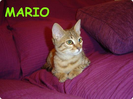 Mario feliz en su nuevo hogar!!