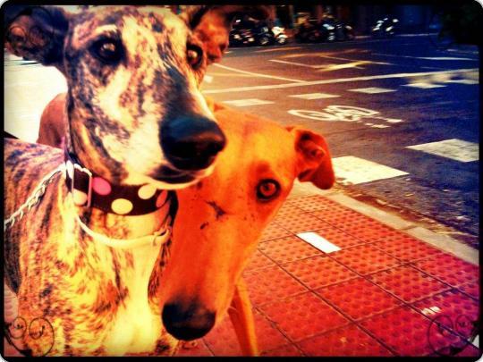 Pekin, ahora Argos con su hermanita