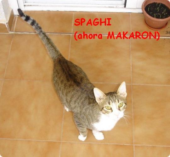 Noticias de Spaghi (ahora Makaron)