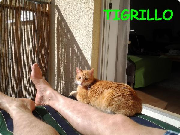 Tigrillo