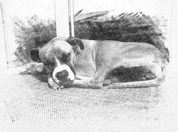 Dana, adoptada en Alemania