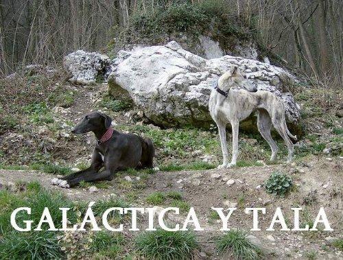 GALÁCTICA Y TALA