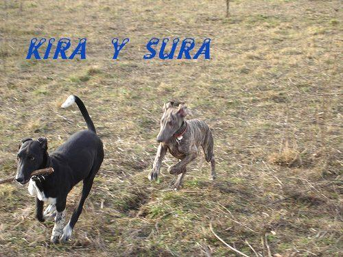 KIRA  Y  SURA