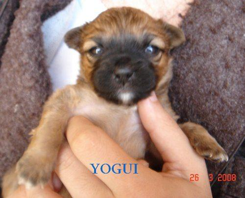 YOGUI ( ALEX )