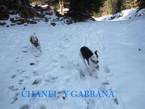 CHANEL Y GABBANA