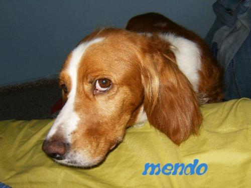 MENDO