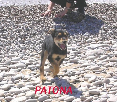 PATONA ( ODETTE )