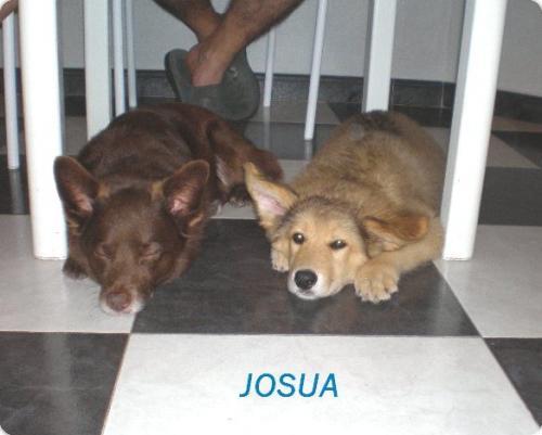 JOSUA
