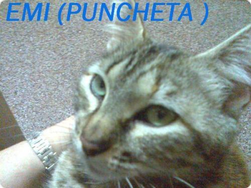 EMI (PUNCHETA )