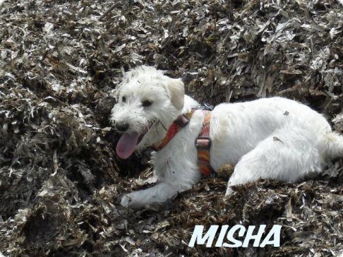 MISHA ( ENA )