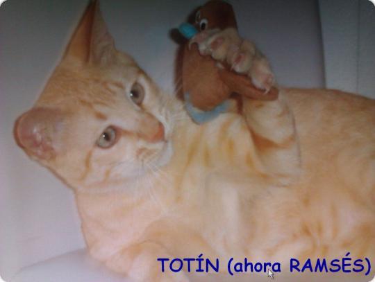 Totín (ahora Ramsés)
