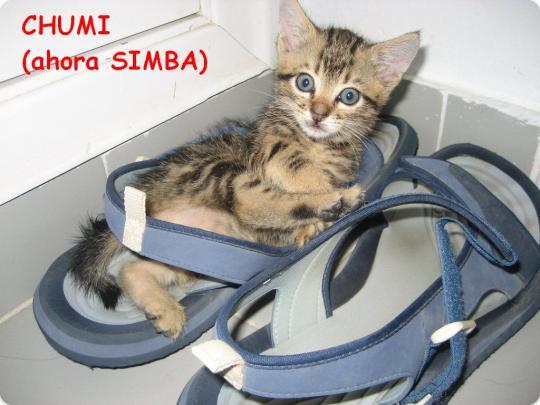 Noticias de Chumi (ahora Simba)