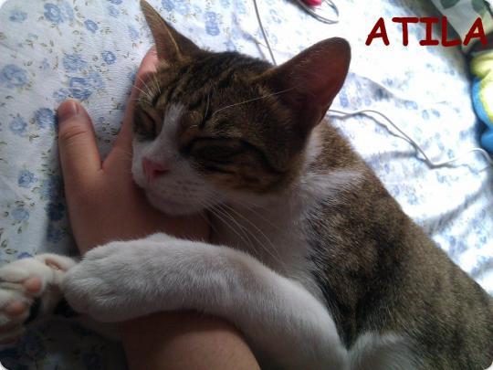 Atila ahora vive en Madrid y está más gordete!!