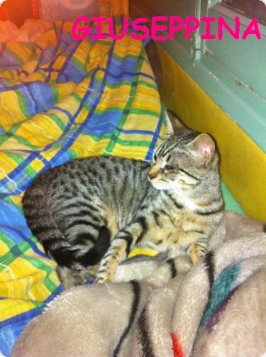 Giuseppina feliz en su nuevo hogar!!