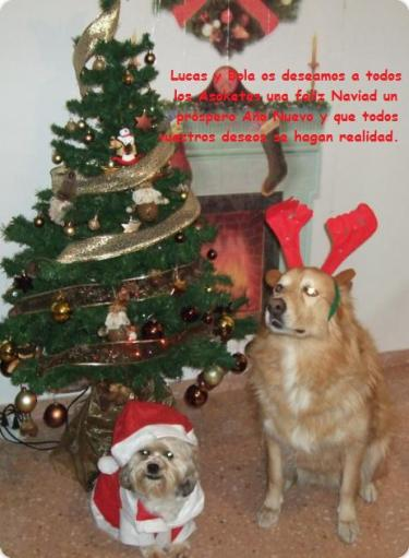 Lucas y Bola en Navidad