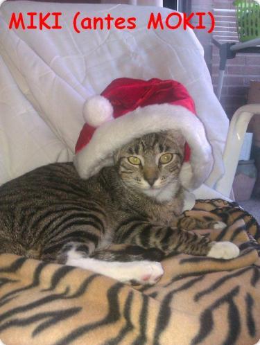 Miki (antes Moki) nos felicita la Navidad!!