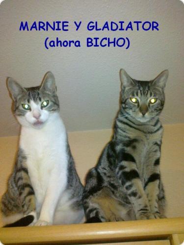 Gladiator (ahora Bicho) y Marnie nos felicitan las fiestas!