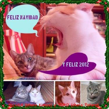 Pelusa y Topo nos felicitan la Navidad!!