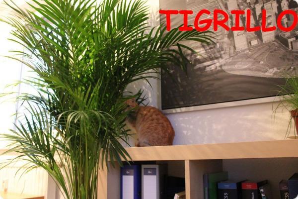 Primera foto de Tigrillo en Alemania!!