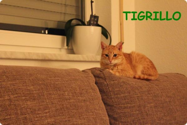 Tigrillo - news!!