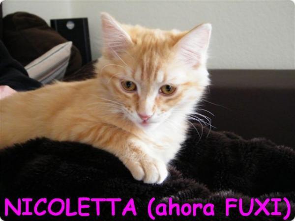 Nicoletta (ahora Fuxi)