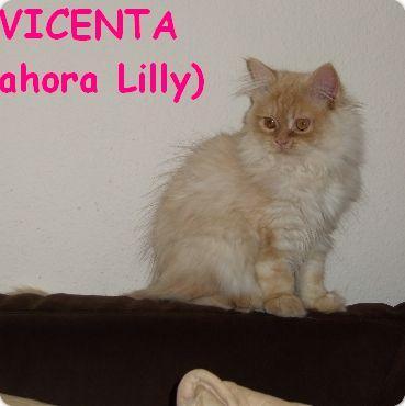 Vicenta (ahora Lilly)