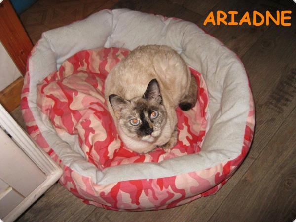 Ariadne en Alemania