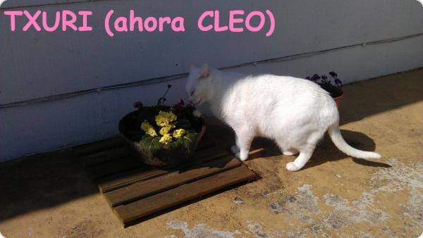 Txuri (ahora Cleo)