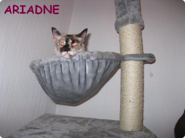 Aridne en Alemania