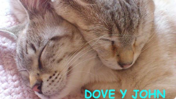 DOVE (ahora LEA) y JOHN (ahora FINDUS)!