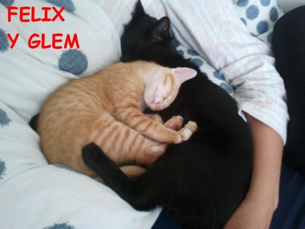 Felix y Glem