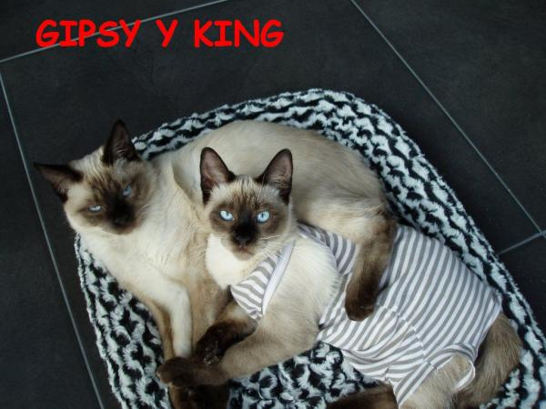 Gipsy y King