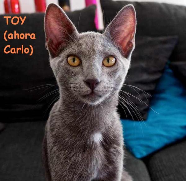 Toy (ahora Carlo)