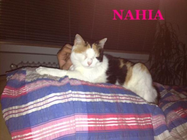 Nahia, ahora Anni