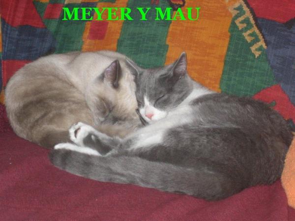 MEYER Y MAU
