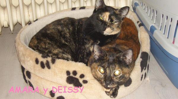 Deissy y Amara