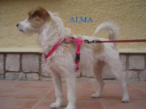 ALMA ( DAISY )