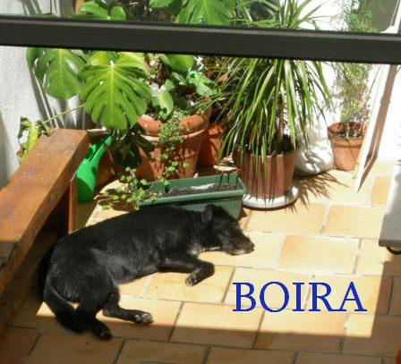BOIRA