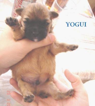 YOGUI ( ALEX )