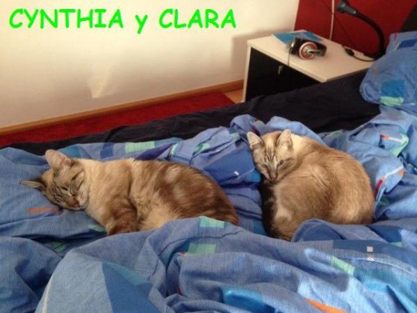 CYNTHIA Y CLARA
