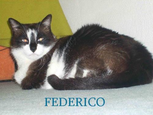 frederico2a.jpg