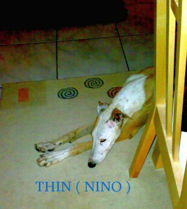THIN ( NINO )